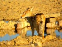 Animali africani del sud Immagine Stock Libera da Diritti