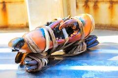 Il nero seghettato fresco del granchio del fango nel mercato dei frutti di mare Fotografia Stock