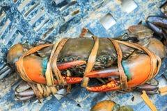 Il nero seghettato fresco del granchio del fango nel mercato dei frutti di mare Fotografie Stock Libere da Diritti