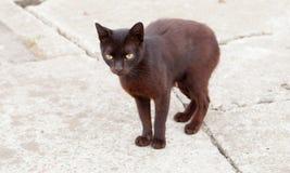 Il nero smarrito solo del gatto Fotografie Stock Libere da Diritti