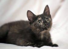 Il nero sveglio del gattino con lo zenzero Immagine Stock