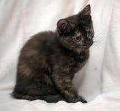 Il nero sveglio del gattino con lo zenzero Immagine Stock Libera da Diritti