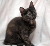 Il nero sveglio del gattino con lo zenzero Fotografie Stock