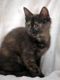 Il nero sveglio del gattino con lo zenzero Immagini Stock