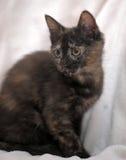 Il nero sveglio del gattino con lo zenzero Fotografia Stock