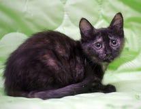 Il nero sveglio del gattino con lo zenzero Fotografia Stock Libera da Diritti