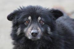 Il nero triste nessun cane della razza su un fondo grigio fotografia stock libera da diritti