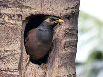 Il nido Fotografia Stock