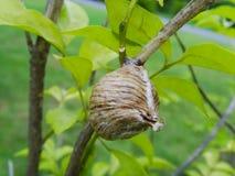 Il nido del calabrone Fotografie Stock