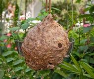 Il nido del calabrone abbandonato vuoto Immagine Stock Libera da Diritti