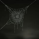 Il nido del ragno Immagine Stock