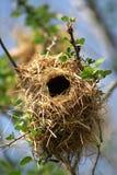 Il nido dell'uccello Immagini Stock