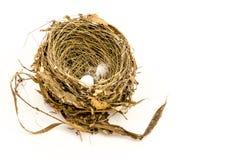 Il nido dell'uccello con l'uovo Fotografia Stock
