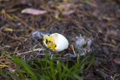 Il nido dell'uccello con le coperture è caduto al pavimento Fotografie Stock