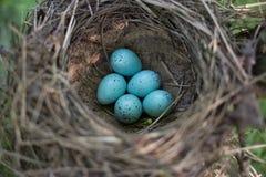 Il nido dell'uccello nel loro habitat naturale Fotografia Stock Libera da Diritti