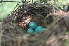 Il nido dell'uccello nel loro habitat naturale Fotografie Stock