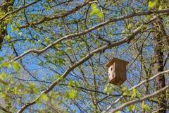 Il nido dell'uccello sull'albero Fotografia Stock Libera da Diritti