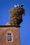 Il nido della cicogna bianca Fotografie Stock Libere da Diritti