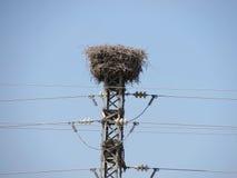 Il nido della cicogna costruito in un pilone della griglia di potere Immagine Stock