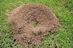 Il nido della formica Fotografie Stock