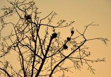Il nido della formica sulla siluetta del ramo Immagine Stock