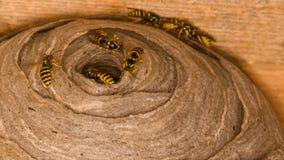 Il nido della vespa Fotografie Stock Libere da Diritti