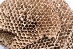 Il nido della vespa Fotografia Stock Libera da Diritti