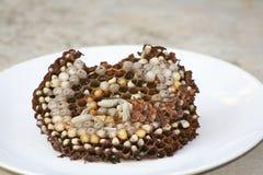 Il nido della vespa cotta a vapore, alimento tailandese tradizionale nordico fotografie stock libere da diritti