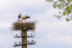 Il nido delle cicogne accoppia su un fondo delle nuvole della luce e del cielo blu Immagini Stock Libere da Diritti