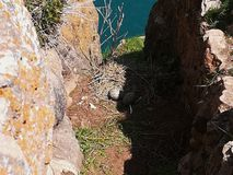 Il nido e le uova del gabbiano in natura fotografia stock