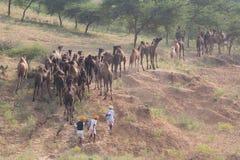 Il nomade indiano ha assistito al cammello annuale Mela di Pushkar immagini stock