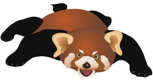 Il non vostro orso normale di volo Immagini Stock