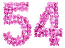 Il numero arabo 54, cinquantaquattro, dai fiori della viola, ha isolato la o Fotografia Stock Libera da Diritti