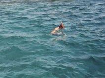 Il nuotatore con una maschera e una presa d'aria impegnate nello snrkelling in rosso marino esamina il mondo subacqueo fotografia stock