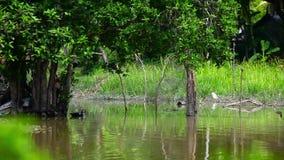Il nuoto dell'anatra nello stagno e gli uccelli sorvolano lo stagno archivi video