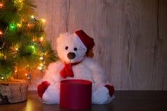 Il nuovo anno, orso di Natale sta sedendosi sotto l'albero con una scatola rossa del giro vuoto aperto per mettere l'oggetto Spaz fotografie stock