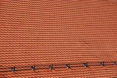 Nuova struttura rossa del tetto Fotografia Stock Libera da Diritti