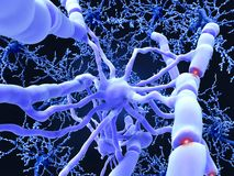 Il Oligodendrocyte forma le guaine di mielina d'isolamento intorno all'ascia del neurone illustrazione di stock