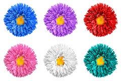 Il pacchetto dell'aster colorato fiorisce con la macro gialla del cuore isolato immagine stock