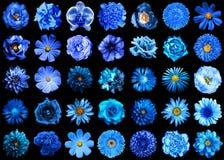 Il pacchetto mega del blu naturale e surreale fiorisce 35 in 1 isolato immagini stock