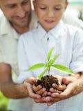 Il padre istruisce il figlio per preoccuparsi una pianta fotografia stock