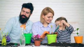 Il padre, la madre ed il loro figlio piantano i fiori a colori vasi Un ragazzo con una scapola versa la terra in un vaso e video d archivio