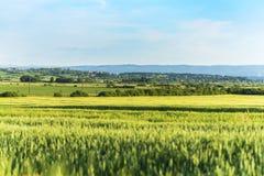 Il paesaggio è un giacimento di grano, campagna in Ucraina Fotografie Stock