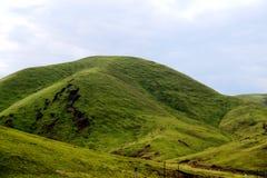 Il paesaggio alpino del pascolo sul plateau di Qinghai Tibet Fotografia Stock
