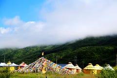 Il paesaggio alpino del pascolo sul plateau di Qinghai Tibet Immagine Stock Libera da Diritti