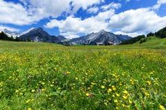 Il paesaggio alpino fantastico con il prato luminoso fiorisce sotto cielo blu Immagine Stock Libera da Diritti