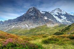 Il paesaggio alpino spettacolare con la montagna fiorisce, la Svizzera, Europa Fotografia Stock Libera da Diritti