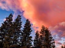 Il paesaggio arancione si rannuvola i pini fotografia stock