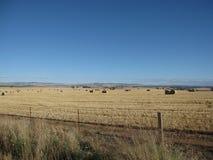 Il paesaggio australiano della strada principale sugli agricoltori del fieno dell'erba asciutta sistema Immagine Stock