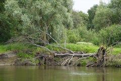 Il paesaggio bielorusso Fotografia Stock